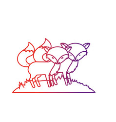 line cute fox animal couple together vector image
