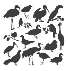 Set of birds silhoettes vector