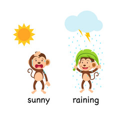 opposite words sunny and raining vector image