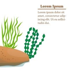 Different algae cartoon vector
