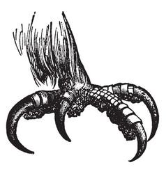 Eagle talon vintage vector