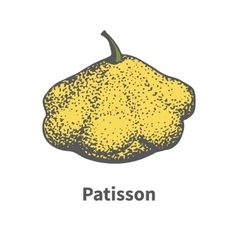 Hand-drawn yellow ripe large squash vector
