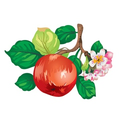 Apple-tree branch vector
