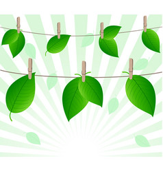 Leaves on ropes vector