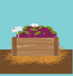 Mangosteen in a wooden crate vector