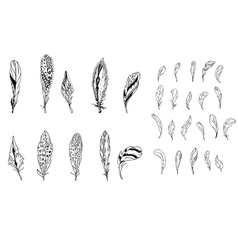Feathers Black and white vector image