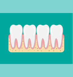 tooths icon with gum vector image
