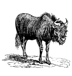 Vintage black wildebeest vector