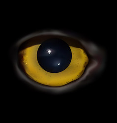 Owl eye macro vector