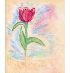 Chalk Drawn Tulip2 vector image vector image