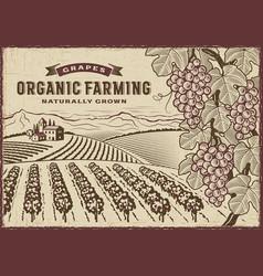 Grapes organic farming landscape vector