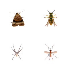 Realistic butterfly gnat spider and other vector