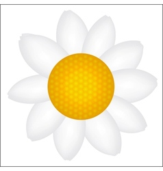 Beautiful daisy icon vector