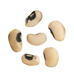 Dry beans isolated vector