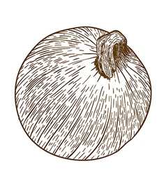 Engraving one onion vector