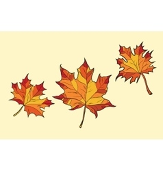 Maple leaves red vector image
