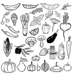 set of hand drawn vegetables and fruits design vector image vector image