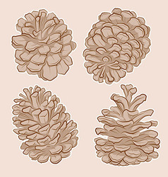 Pine cones drawing vector