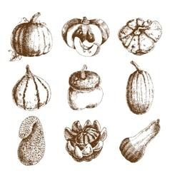 Pumpkin hand drawn icons set doodle vector