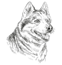 Hand drawing portrait of siberian husky vector