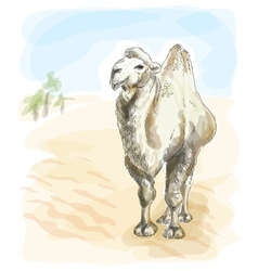 camel watercolor style vector image vector image