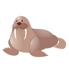 Cute sea lion on white background vector