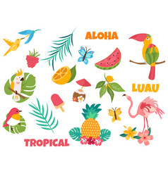 big set of tropical birds and elements vector image