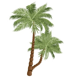 Two palm trees4 vector