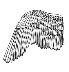 Wing Hand Draw Sketch vector image