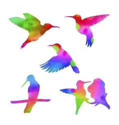 Watercolor colibri set vector