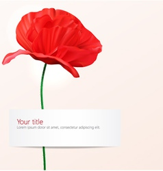 Background with poppy flower vector