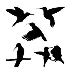 Colibri set vector