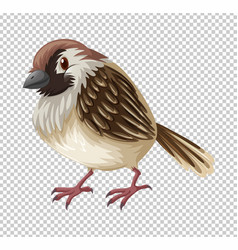 Sparrow bird on transparent background vector