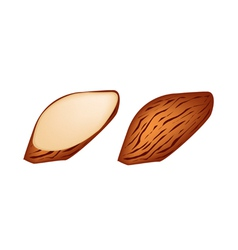 Whole and slice almonds on white background vector