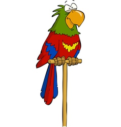parrot on a perch vector image vector image