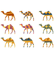 camel with a pattern set vector image