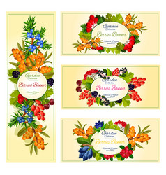 Wild berries and fruits banners set vector