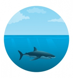 Shark in the sea vector
