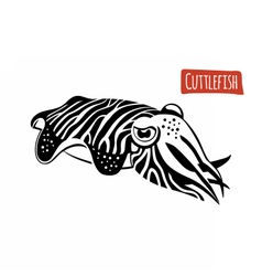 Cuttlefish black and white vector image vector image