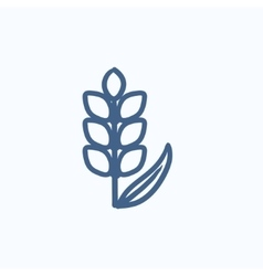 Wheat sketch icon vector image