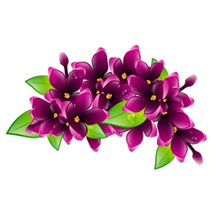 Lilac flower branch vector