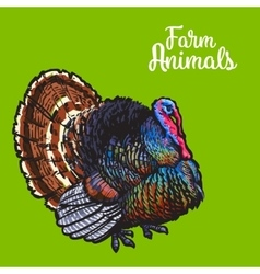 Isolated sketc farm turkey on a background vector