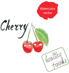 Cherry watercolor watercolor vector