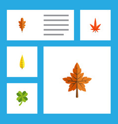 Flat icon maple set of leafage alder linden and vector
