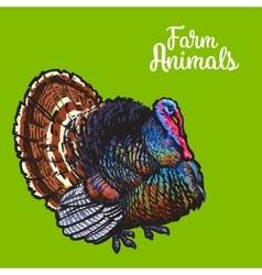 Isolated sketc farm turkey on a background vector