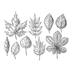 Autumn drawing leaves set isolated objects vector