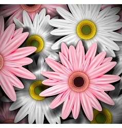 Background with gerberas vector image