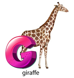 A letter g for giraffe vector