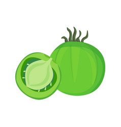 Big ripe green fresh half tomato vector