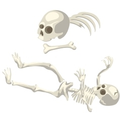 Human skeleton and bones different parts of body vector image vector image